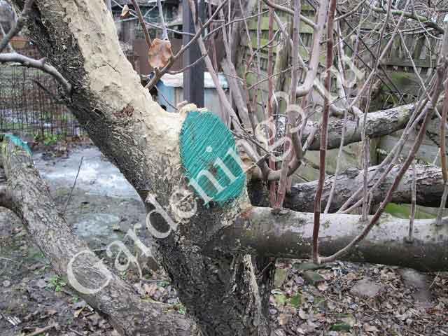 уход-за-деревьями
