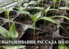 выращивание расады перца на подоконнике