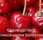 обработка вишни и черешни от вишневой мухи