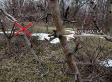 плодовые образования на деревьях